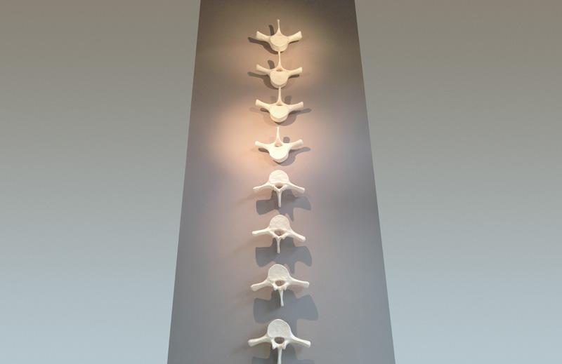 vertebras-2